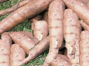 Cassava (Manioc) – Let's Cook With Gloria