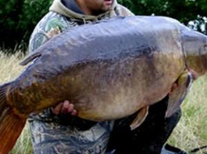Giant  carp fish