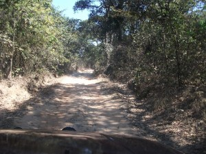 Track leading to Kumasamba Lodge-low res
