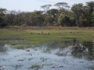 Wild Life on lakes- Kumasamba Lodge-low res