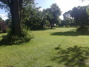 Nasikambo - Garden3_kitweonline