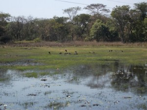Kumasamba Lodge bird life_kitweonline