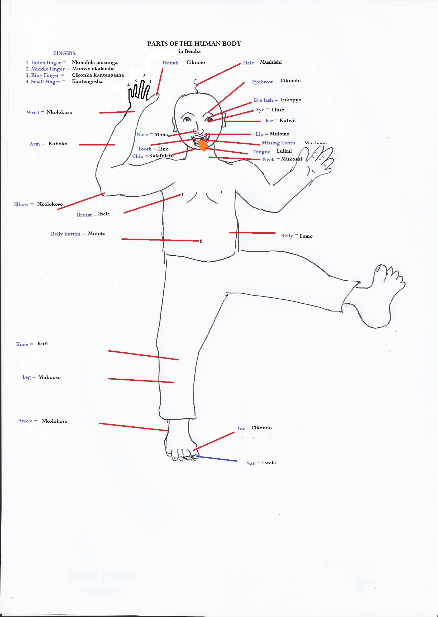 Bemba Lesson 26: Human AnatomyKitwe On Line | Kitwe On Line